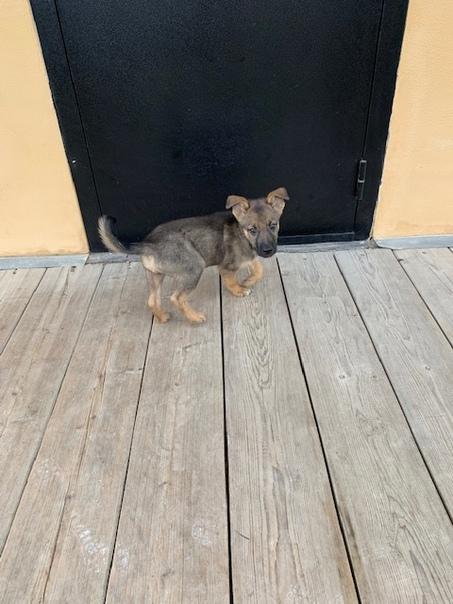Найден щенок! 🆘27 сентября утром в Совхозе Боровск...
