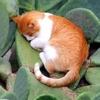 коты в необычных местах